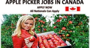 apple picker Jobs in Canada